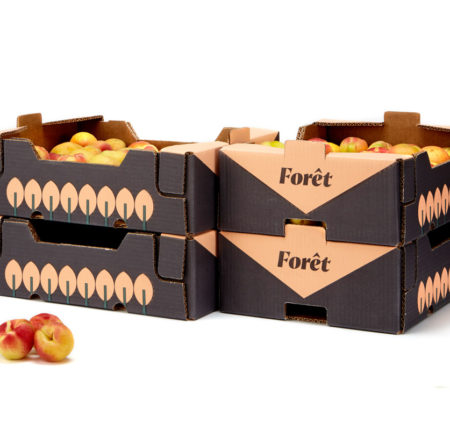 forêt fruits